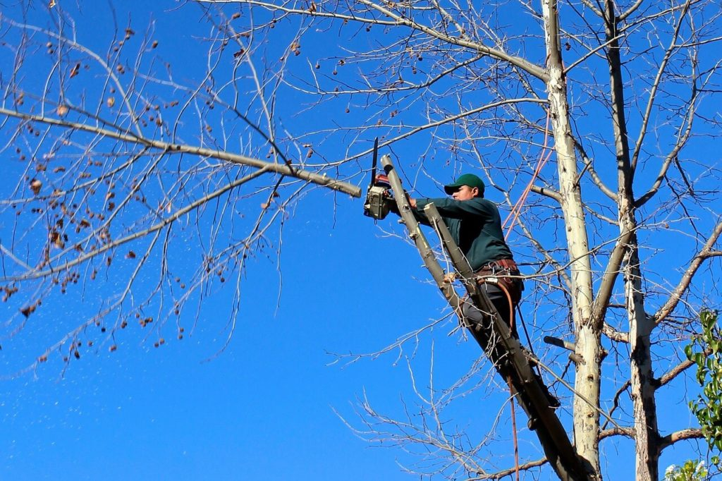 Contact Us-Coconut Creek FL Tree Trimming and Stump Grinding Services-We Offer Tree Trimming Services, Tree Removal, Tree Pruning, Tree Cutting, Residential and Commercial Tree Trimming Services, Storm Damage, Emergency Tree Removal, Land Clearing, Tree Companies, Tree Care Service, Stump Grinding, and we're the Best Tree Trimming Company Near You Guaranteed!