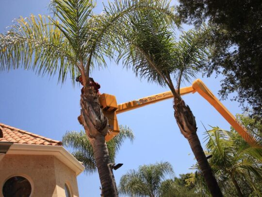 Palm Tree Trimming-Coconut Creek FL Tree Trimming and Stump Grinding Services-We Offer Tree Trimming Services, Tree Removal, Tree Pruning, Tree Cutting, Residential and Commercial Tree Trimming Services, Storm Damage, Emergency Tree Removal, Land Clearing, Tree Companies, Tree Care Service, Stump Grinding, and we're the Best Tree Trimming Company Near You Guaranteed!