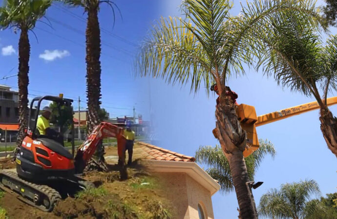 Palm tree trimming & palm tree removal-Coconut Creek FL Tree Trimming and Stump Grinding Services-We Offer Tree Trimming Services, Tree Removal, Tree Pruning, Tree Cutting, Residential and Commercial Tree Trimming Services, Storm Damage, Emergency Tree Removal, Land Clearing, Tree Companies, Tree Care Service, Stump Grinding, and we're the Best Tree Trimming Company Near You Guaranteed!