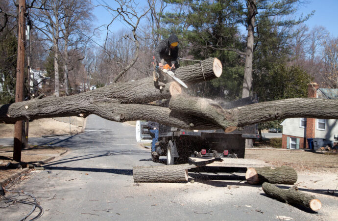 Residential Tree Services-Coconut Creek FL Tree Trimming and Stump Grinding Services-We Offer Tree Trimming Services, Tree Removal, Tree Pruning, Tree Cutting, Residential and Commercial Tree Trimming Services, Storm Damage, Emergency Tree Removal, Land Clearing, Tree Companies, Tree Care Service, Stump Grinding, and we're the Best Tree Trimming Company Near You Guaranteed!