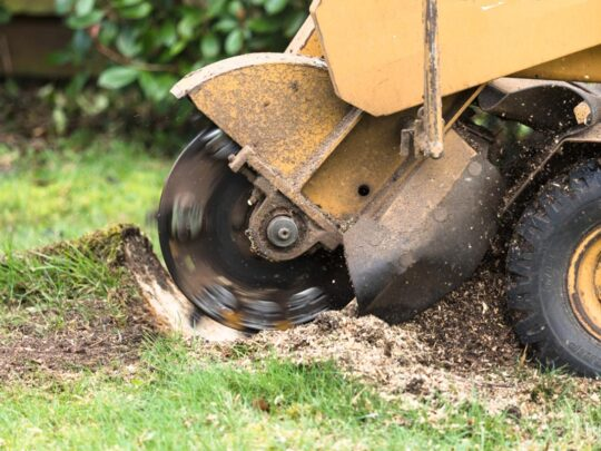 Stump Grinding-Coconut Creek FL Tree Trimming and Stump Grinding Services-We Offer Tree Trimming Services, Tree Removal, Tree Pruning, Tree Cutting, Residential and Commercial Tree Trimming Services, Storm Damage, Emergency Tree Removal, Land Clearing, Tree Companies, Tree Care Service, Stump Grinding, and we're the Best Tree Trimming Company Near You Guaranteed!