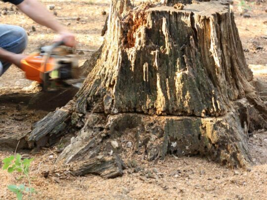 Stump Removal-Coconut Creek FL Tree Trimming and Stump Grinding Services-We Offer Tree Trimming Services, Tree Removal, Tree Pruning, Tree Cutting, Residential and Commercial Tree Trimming Services, Storm Damage, Emergency Tree Removal, Land Clearing, Tree Companies, Tree Care Service, Stump Grinding, and we're the Best Tree Trimming Company Near You Guaranteed!
