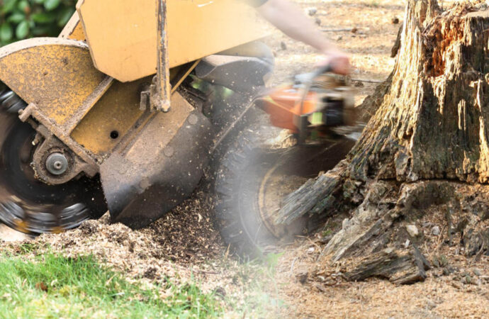 Stump grinding & removal-Coconut Creek FL Tree Trimming and Stump Grinding Services-We Offer Tree Trimming Services, Tree Removal, Tree Pruning, Tree Cutting, Residential and Commercial Tree Trimming Services, Storm Damage, Emergency Tree Removal, Land Clearing, Tree Companies, Tree Care Service, Stump Grinding, and we're the Best Tree Trimming Company Near You Guaranteed!