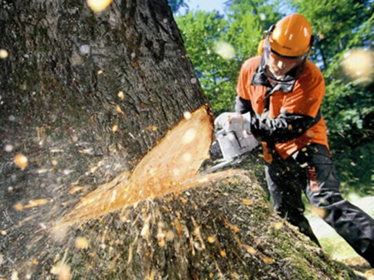 Tree Cutting-Coconut Creek FL Tree Trimming and Stump Grinding Services-We Offer Tree Trimming Services, Tree Removal, Tree Pruning, Tree Cutting, Residential and Commercial Tree Trimming Services, Storm Damage, Emergency Tree Removal, Land Clearing, Tree Companies, Tree Care Service, Stump Grinding, and we're the Best Tree Trimming Company Near You Guaranteed!