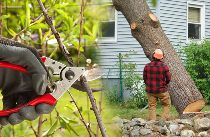 Tree pruning & tree removal-Coconut Creek FL Tree Trimming and Stump Grinding Services-We Offer Tree Trimming Services, Tree Removal, Tree Pruning, Tree Cutting, Residential and Commercial Tree Trimming Services, Storm Damage, Emergency Tree Removal, Land Clearing, Tree Companies, Tree Care Service, Stump Grinding, and we're the Best Tree Trimming Company Near You Guaranteed!